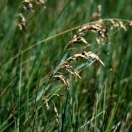 Skarene, pļavas