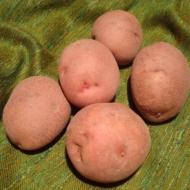 Kartupeļi Gundega