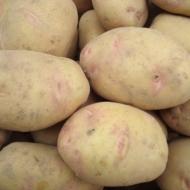 Kartupeļi IMANTA