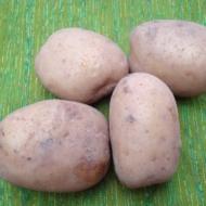 Kartupeļi MONTA